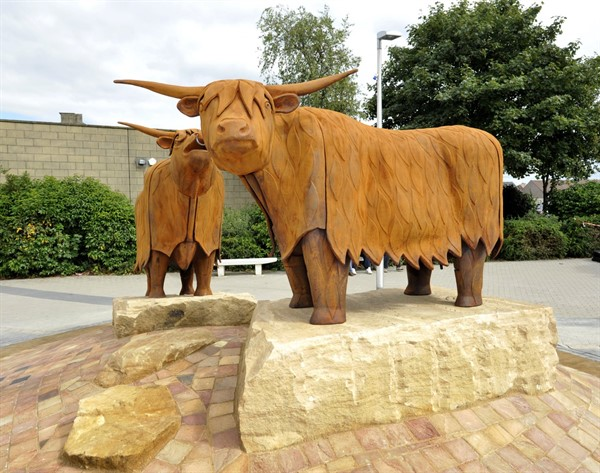 Stenhousemuir Cows in Town Centre